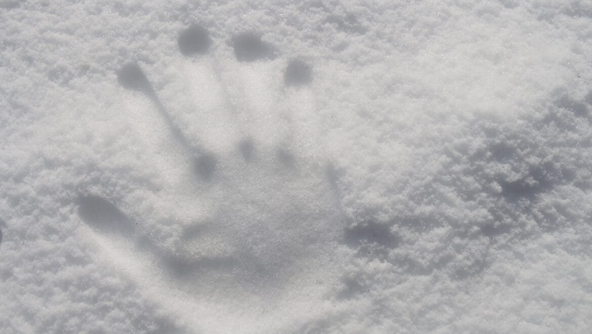 Baby, It's Cold Outside – Lets Learn About Winter